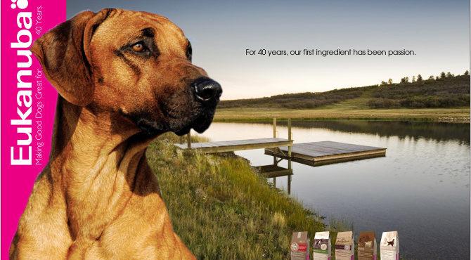 Eukanuba a hosszú kutyaélet titka, avagy a helytelen táplálás kockázata.